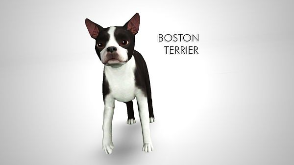Sims 3 pet, pets, dog, Boston Terrier