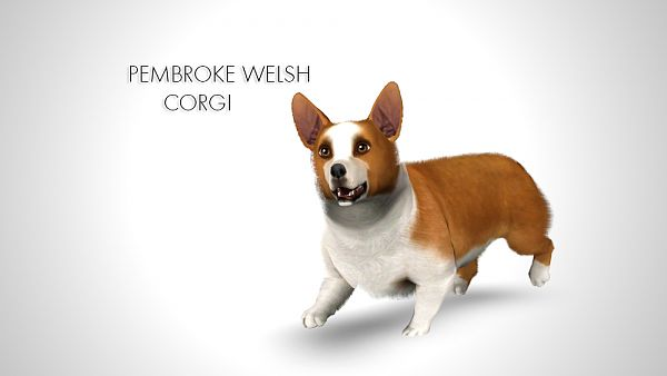 Sims 3 pet, pets, dog, Corgi
