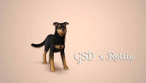 Sims 3 dog, pet, animals, Rottweiler Cross