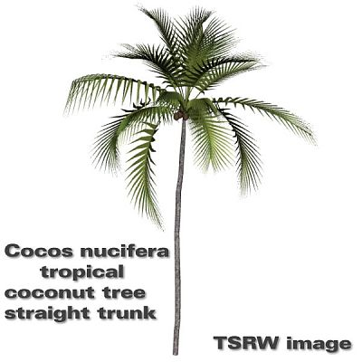 Sims 3 tree, coconut