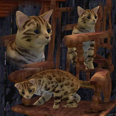 Sims 3 cat, object, decor