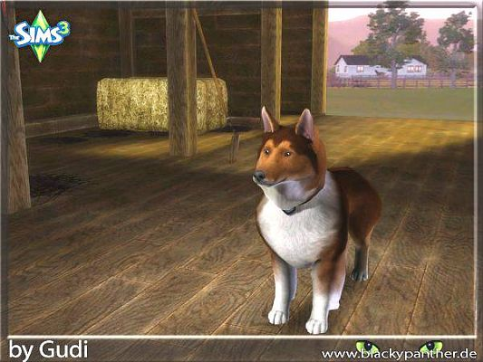 Sims 3 dog, object