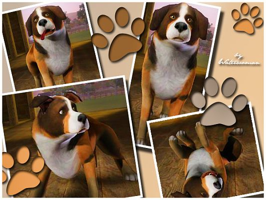 Sims 3 dog, pet, animal