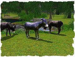 Sims 3 donkeys, animals, objects, decor, decoration