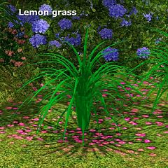 Sims 3 plants, lemon grass, garden