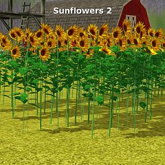Sims 3 sunflowers, plants, object