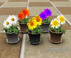 Sims 3 flowers, plants, objects, decor, daisies